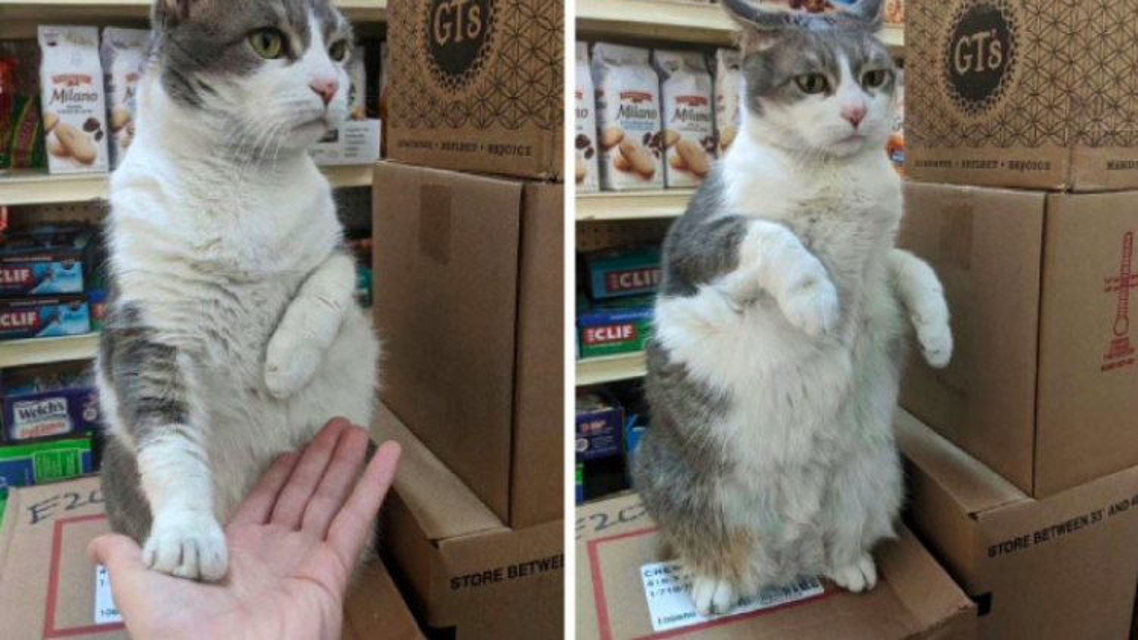 """Những chú mèo """"hiên ngang"""" coi siêu thị như ở nhà"""
