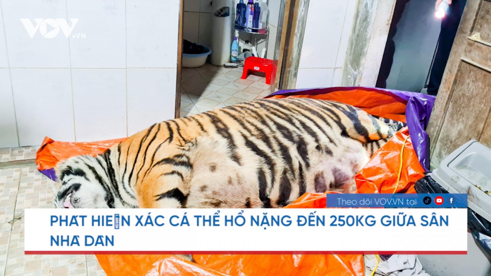"""Nóng 24h: Xác cá thể hổ nằm giữa sân nhà dân, chủ nhà """"đi vắng"""""""