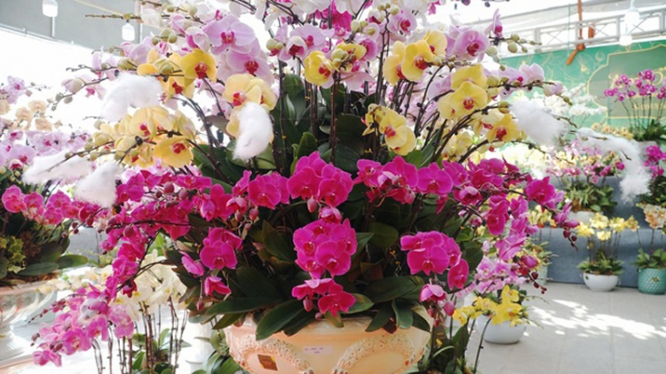 Orchid flowers lure customers ahead of Tet holiday