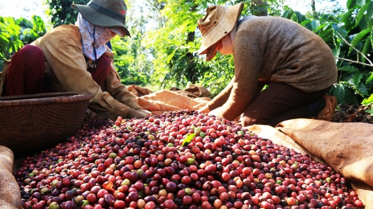 Poland increases imports of Vietnamese coffee