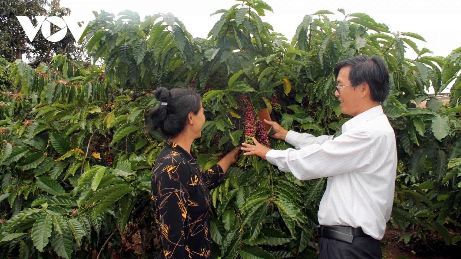 Xuất khẩu cà phê trong năm 2021, tận dụng lợi thế từ EVFTA khi thuế xuất về 0%