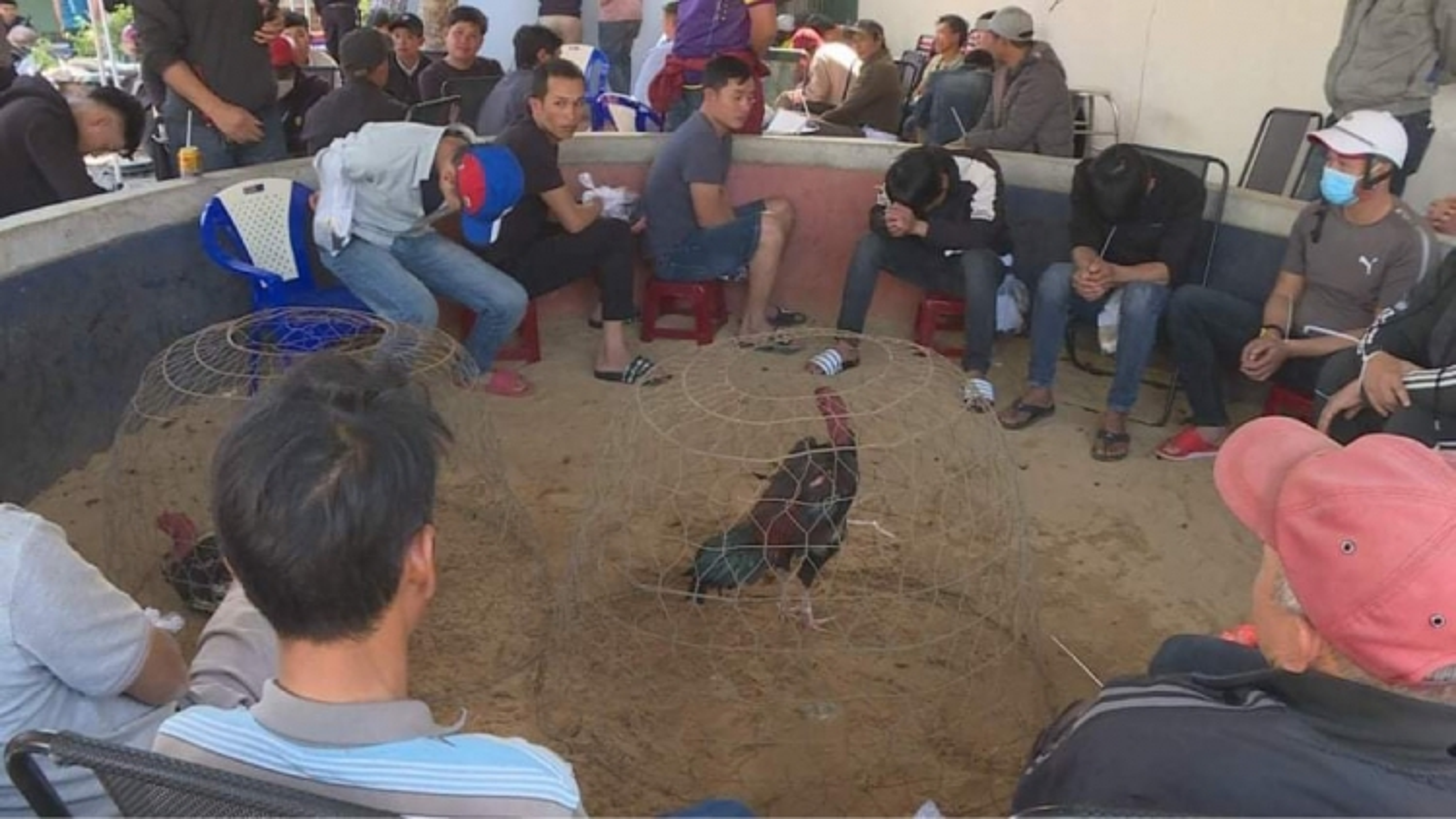 Đắk Lắk: Xử lý gần 50 con bạc tham gia đá gà ăn tiền