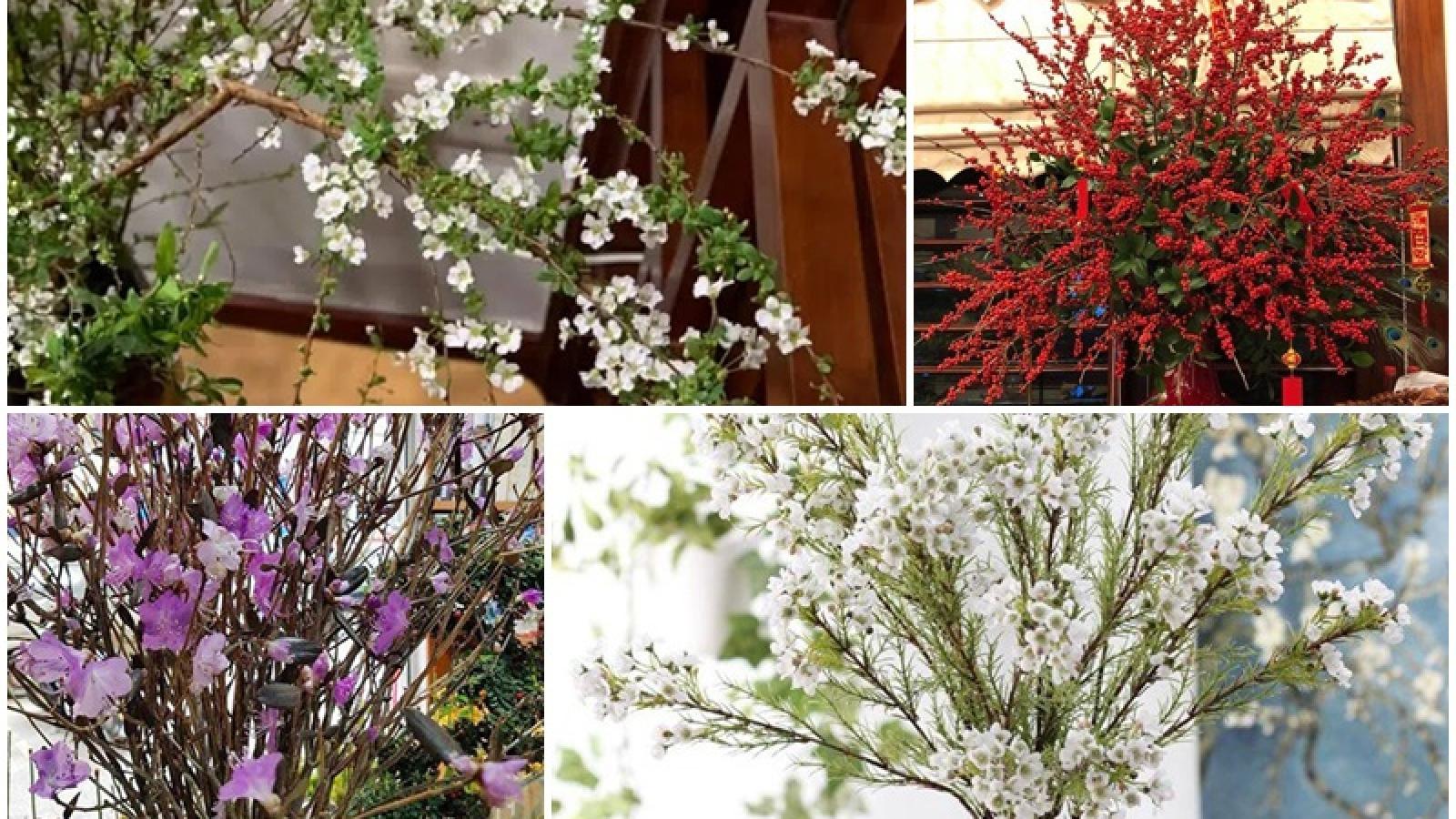Những loại hoa lạ hút khách dịp cận Tết