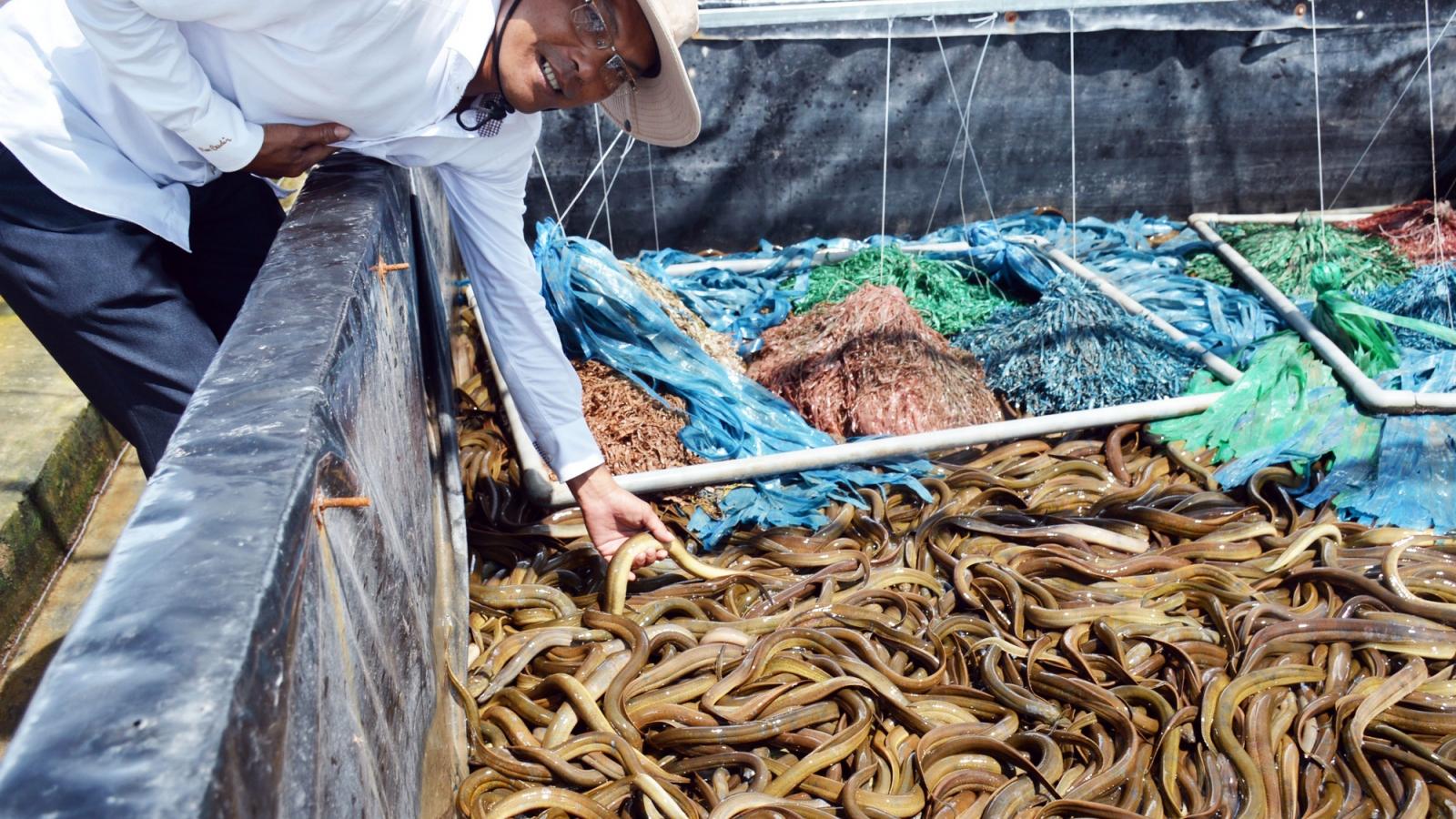Tỷ phú nông dân tỉnh Bạc Liêu nuôi lươn không bùn công nghệ cao, lời 2,5 tỷ đồng