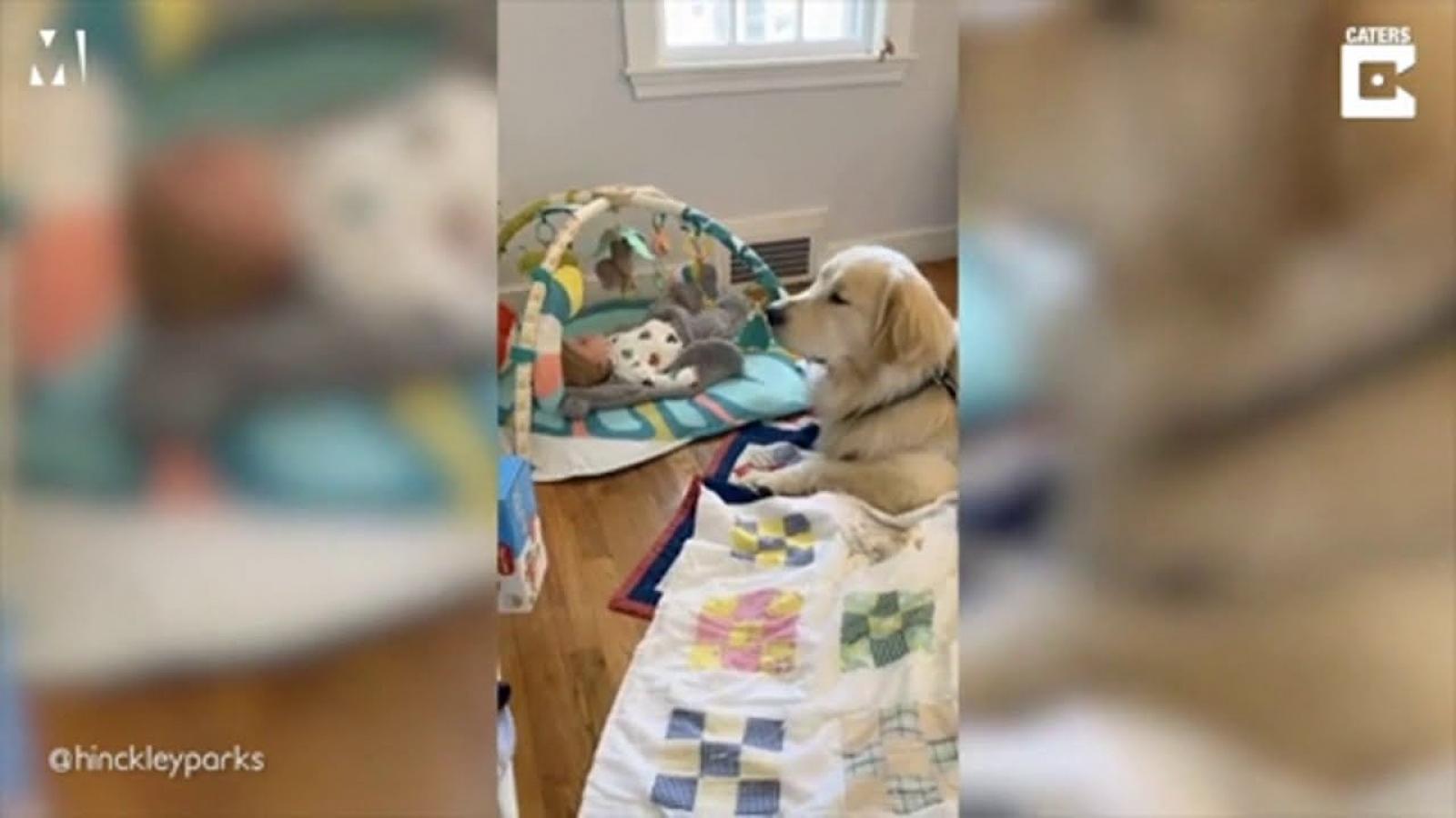 """Tan chảy khoảnh khắc cún cưng làm """"bảo mẫu"""" cho em bé"""