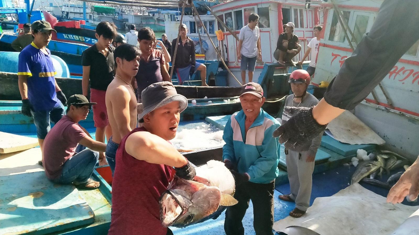 Ngư dân được mùa được giá vụ cá ngừ cuối năm