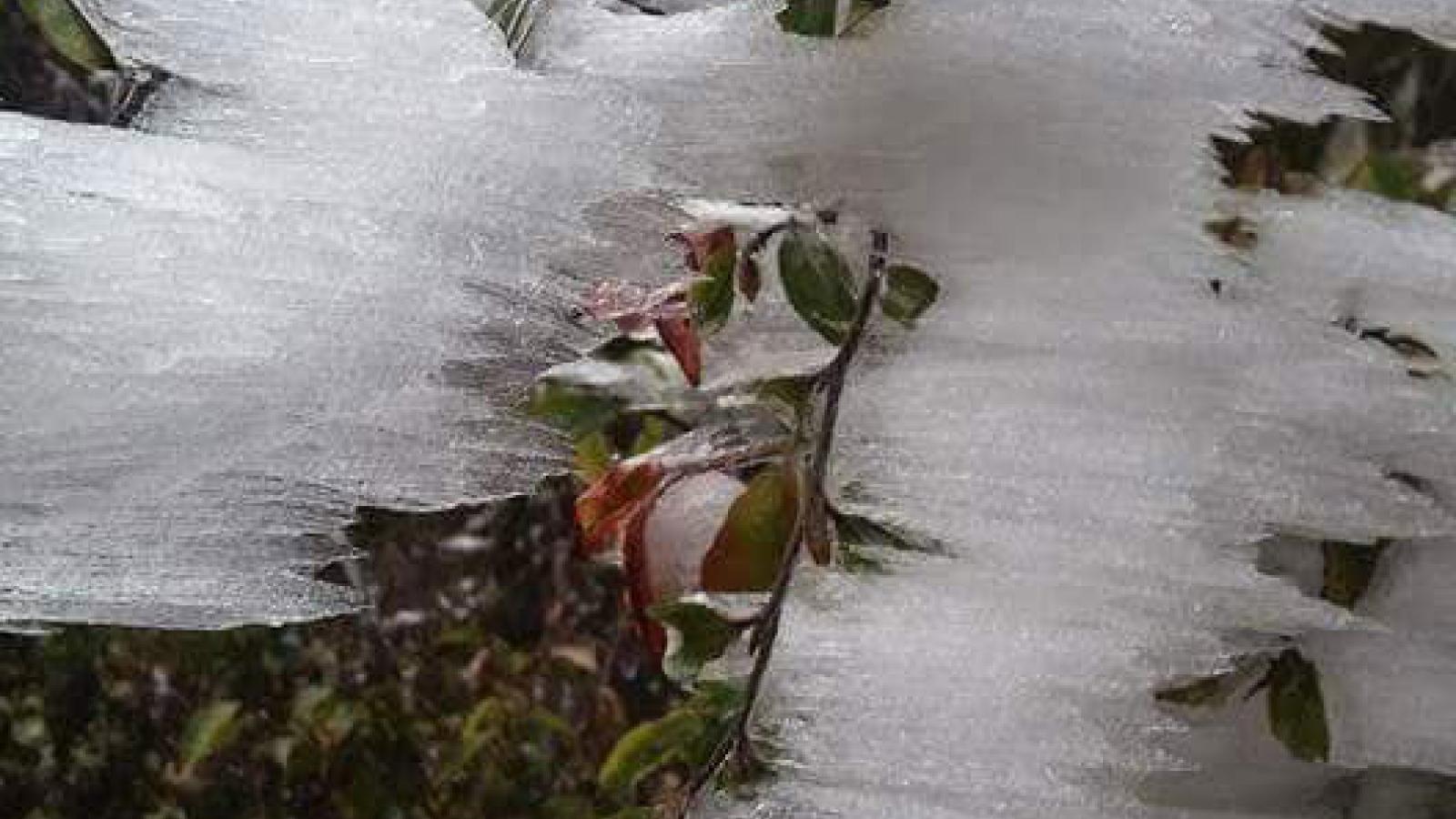Không khí lạnh tăng cường rét dưới 0 độ C, mưa tuyết, băng giá ở vùng núi
