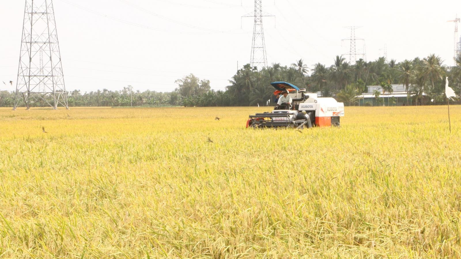 Khuyến cáo người dân không làm lúa vụ 3 để tránh thiệt hại do hạn mặn