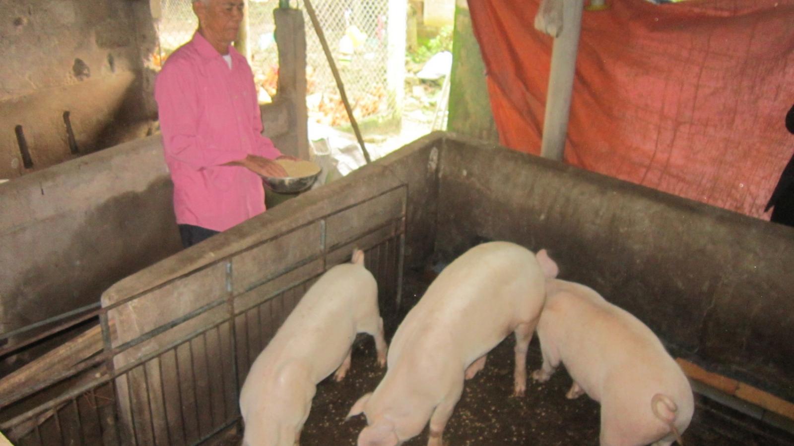 Quảng Bình tăng cường chống rét cho đàn gia súc