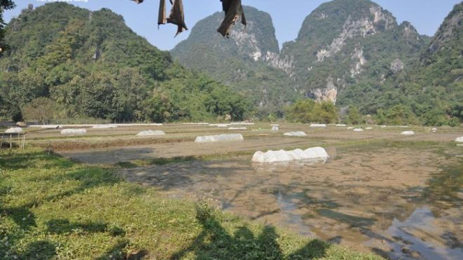 Sửa đường vùi lấp kênh mương, 24 ha đất trồng lúa ở Thanh Hóa thiếu nước