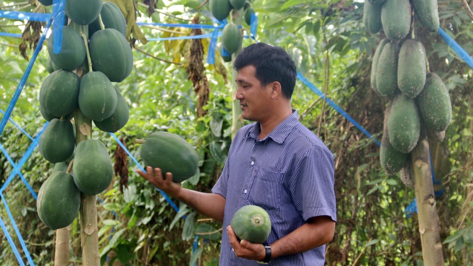 Nhà vườn ở Bà Rịa - Vũng Tàu tất bật chuẩn bị cho vụ trái cây Tết