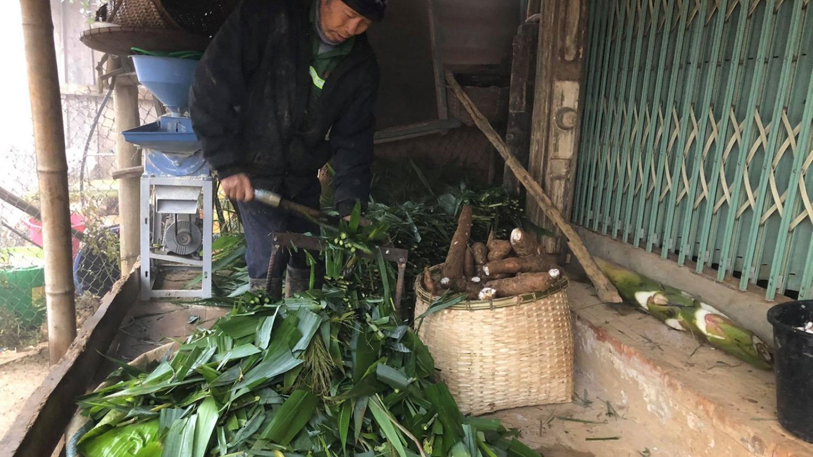 Gần 400 con gia súc ở Sơn La bị chết do rét đậm, rét hại