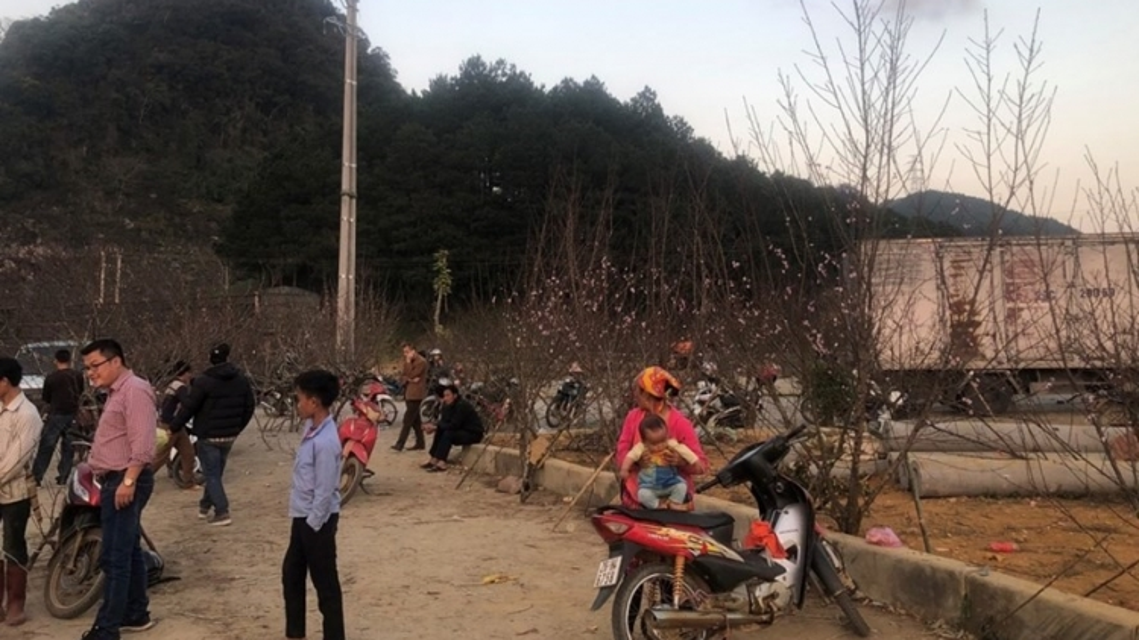 Bộ Nông nghiệp yêu cầu truy xuất nguồn gốc cây đào do người dân trồng