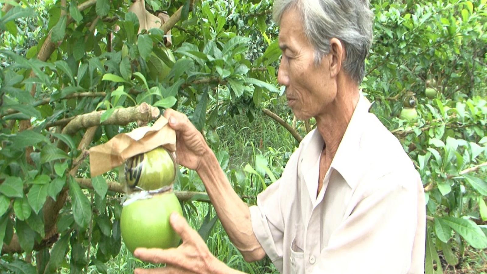 Hậu Giang cung cấp hơn 26.000 tấn trái cây phục vụ thị trường Tết