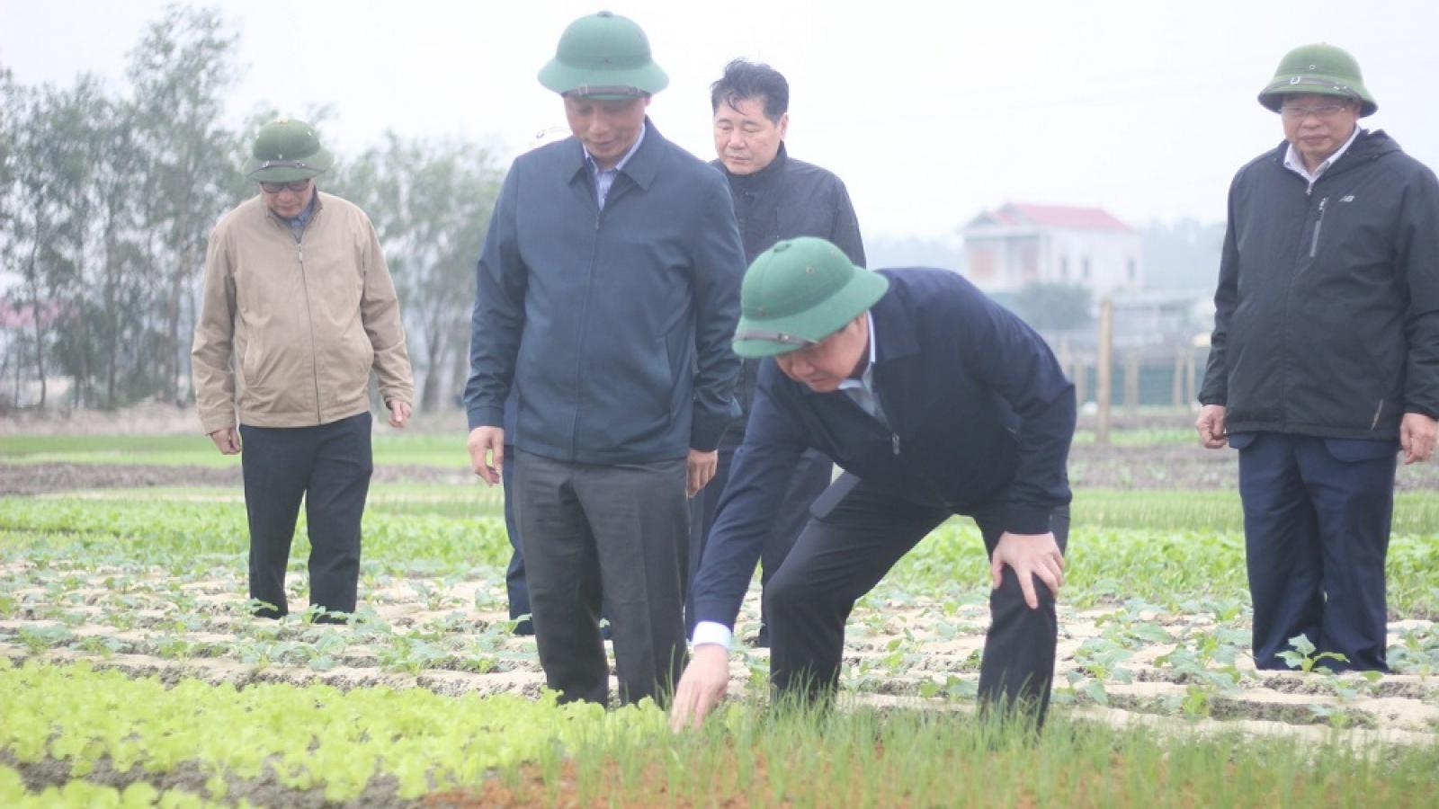 Sản xuất nông nghiệp ở Quảng Bình đang dần phục hồi sau lũ lịch sử