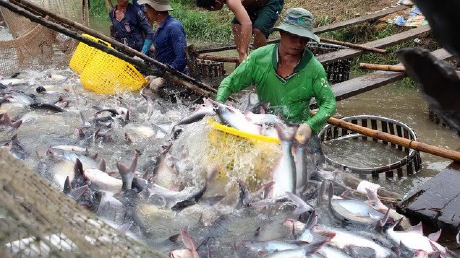 Campuchia xem xét lại quyết định tạm ngừng nhập khẩu cá theo đề xuất của Việt Nam