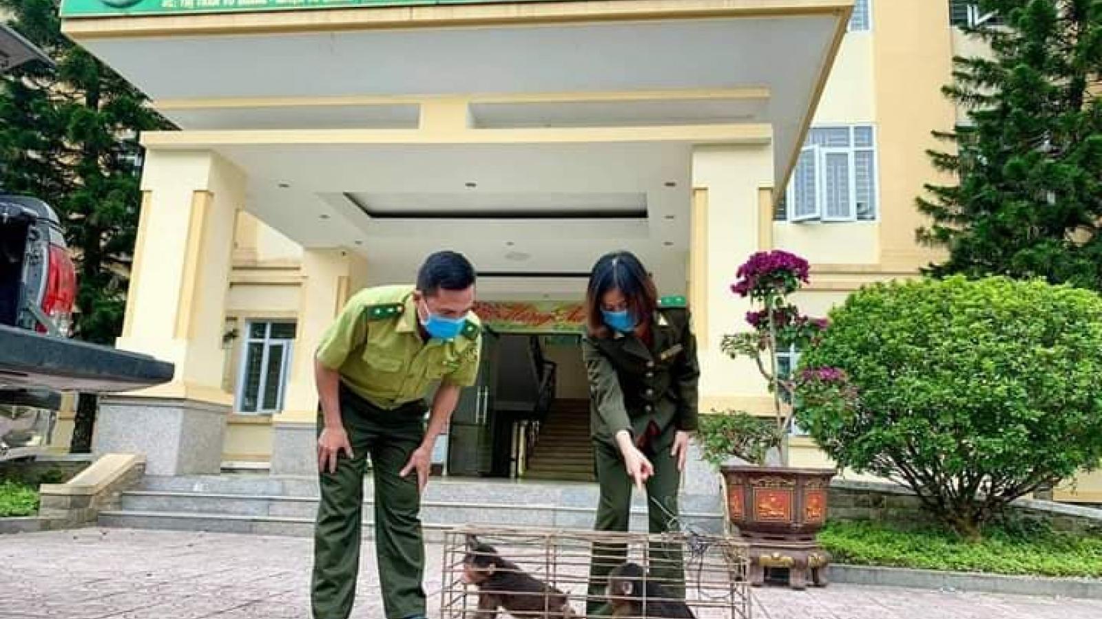 Vườn quốc gia Vũ Quang tiếp nhận 2 khỉ mặt đỏ và 1 trăn đất do người dân giao nộp