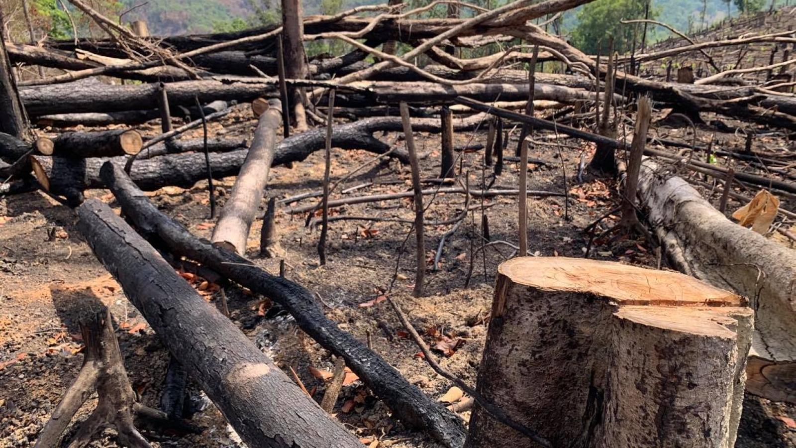 Đắk Lắk điều tra 2 vụ việc phá rừng rất nghiêm trọng