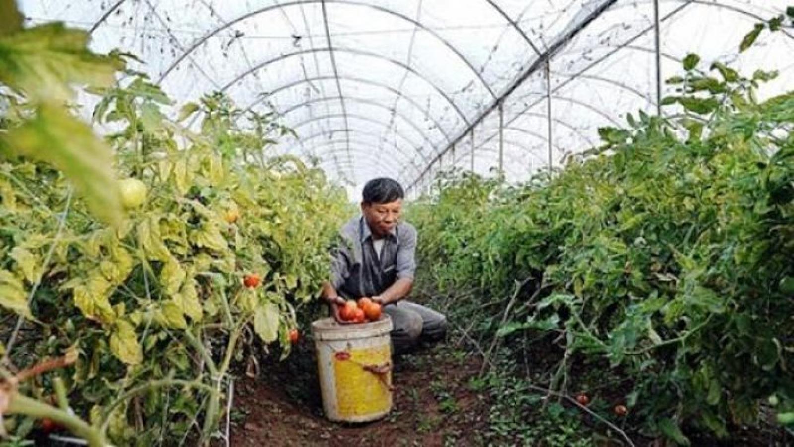 Hà Nội phát huy hiệu quả kinh tế hợp tác xã