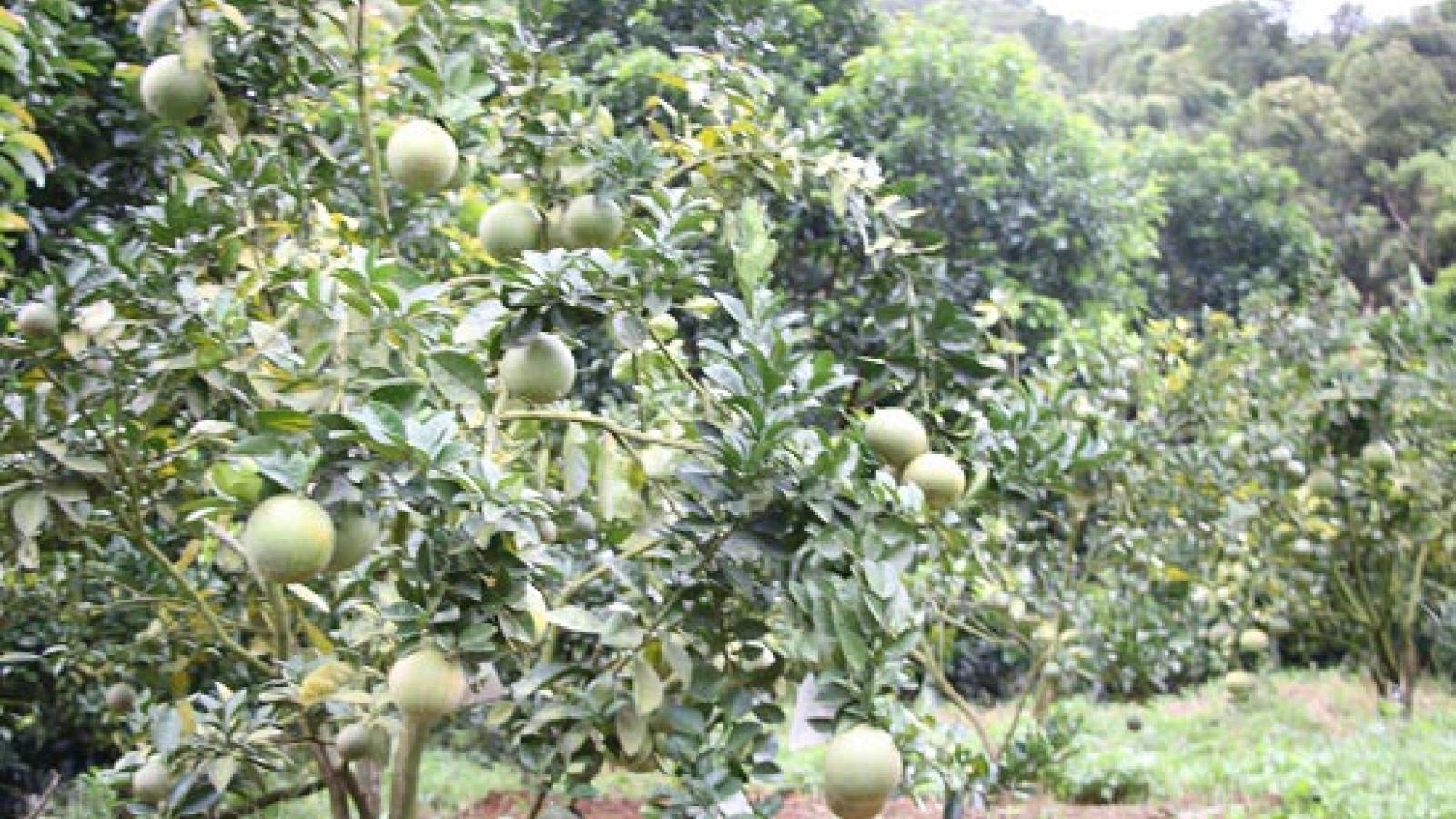 Luật sư tư vấn để chuyển từ đất trồng cây lâu năm sang đất ở