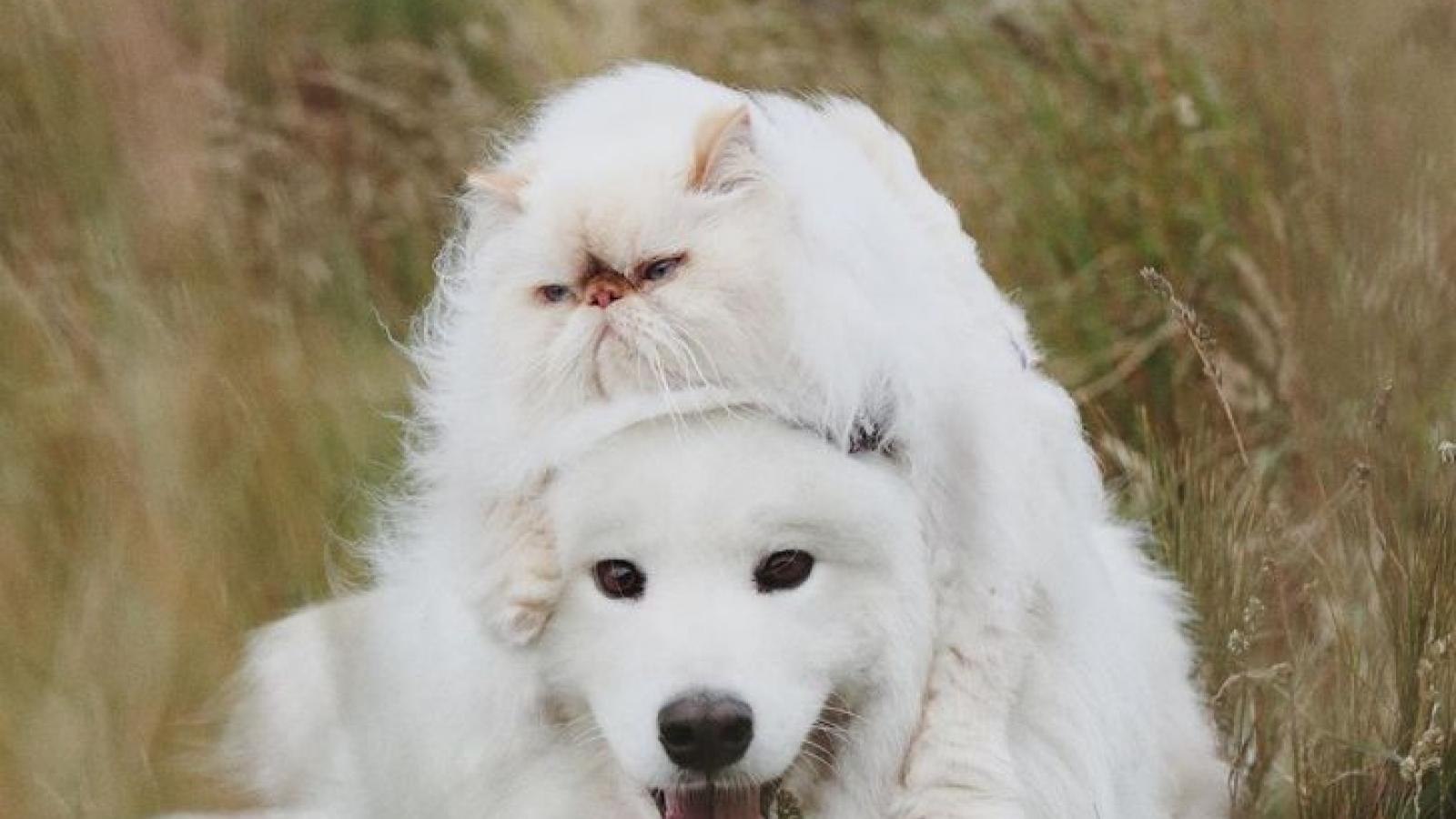Tan chảy trước tình bạn đáng yêu giữa mèo cau có và chó vui vẻ