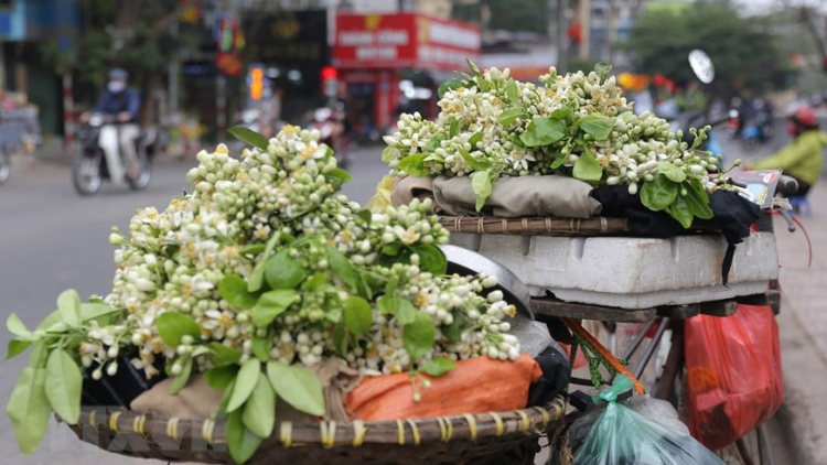 Hanoians prepare flower offerings on 15th day of first lunar month