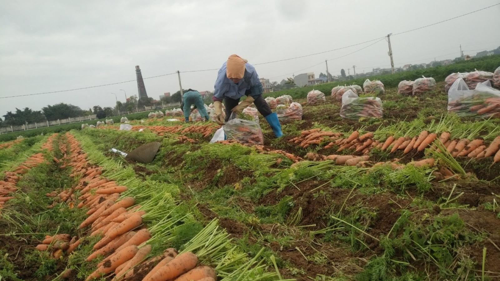 """Ảnh hưởng dịch Covid-19, nhiều mặt hàng nông sản đang cần """"giải cứu"""""""