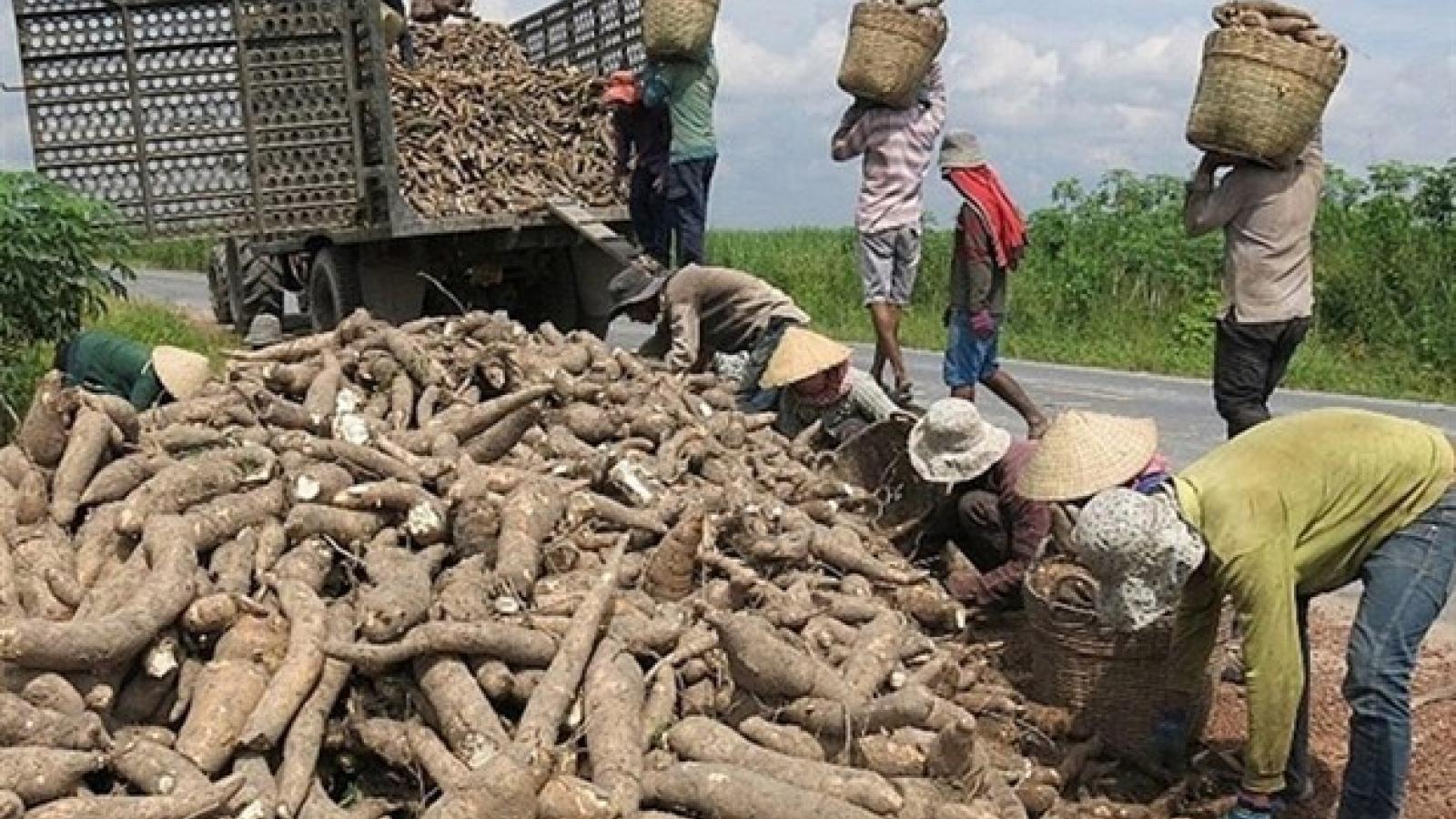 Vietnam gains cassava export growth in 2020