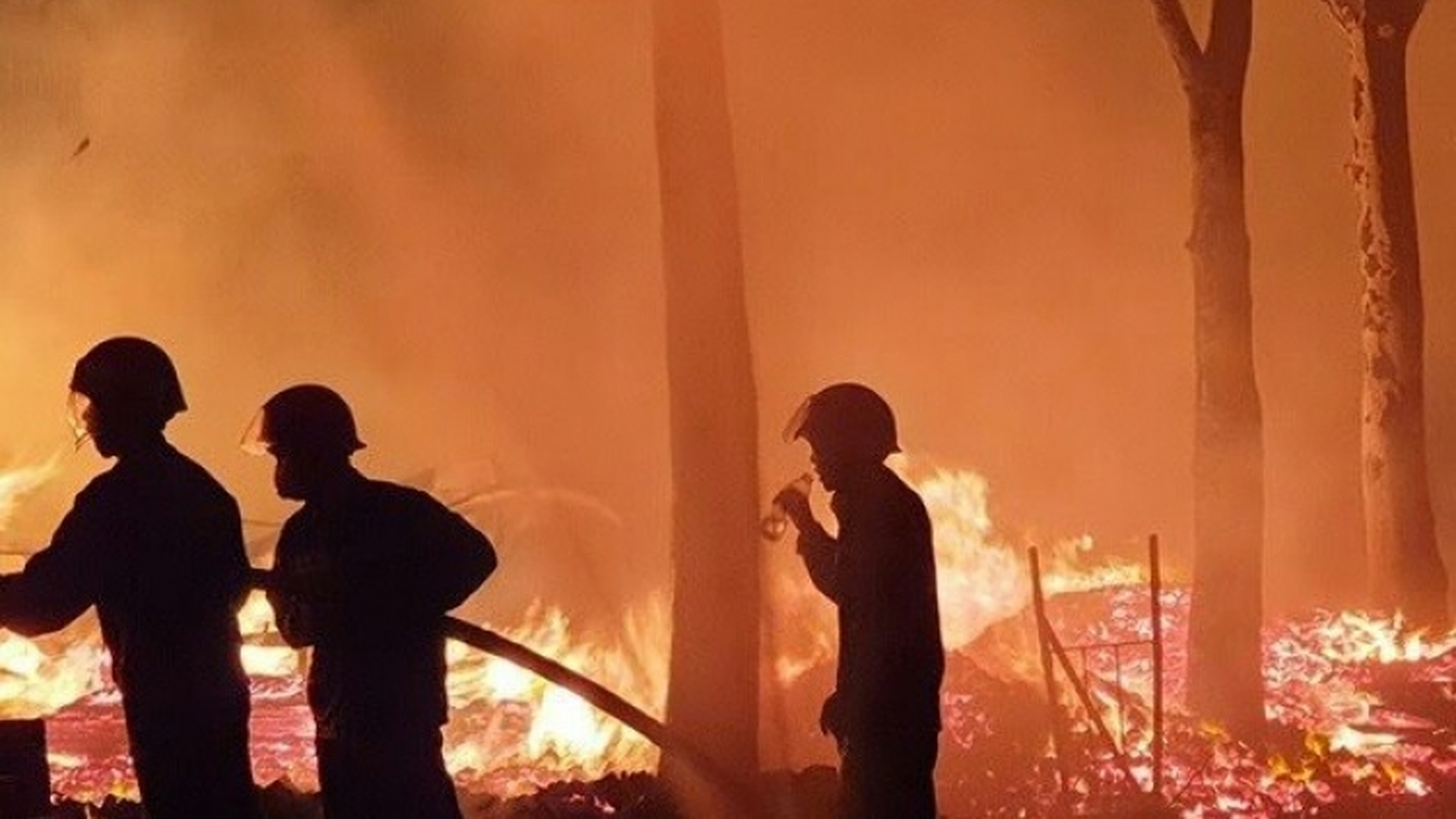 Vườn cây ăn trái rộng 10.000m2 ở Bình Phước bị lửa thiêu rụi trong đêm