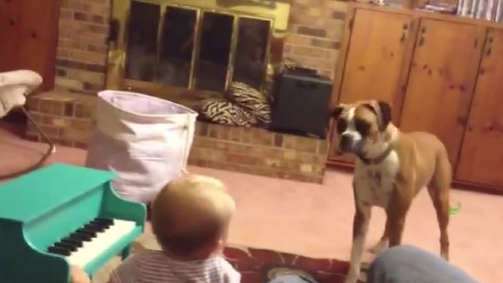Bật cười trước màn trình diễn âm nhạc đáng yêu của em bé và chú chó cưng