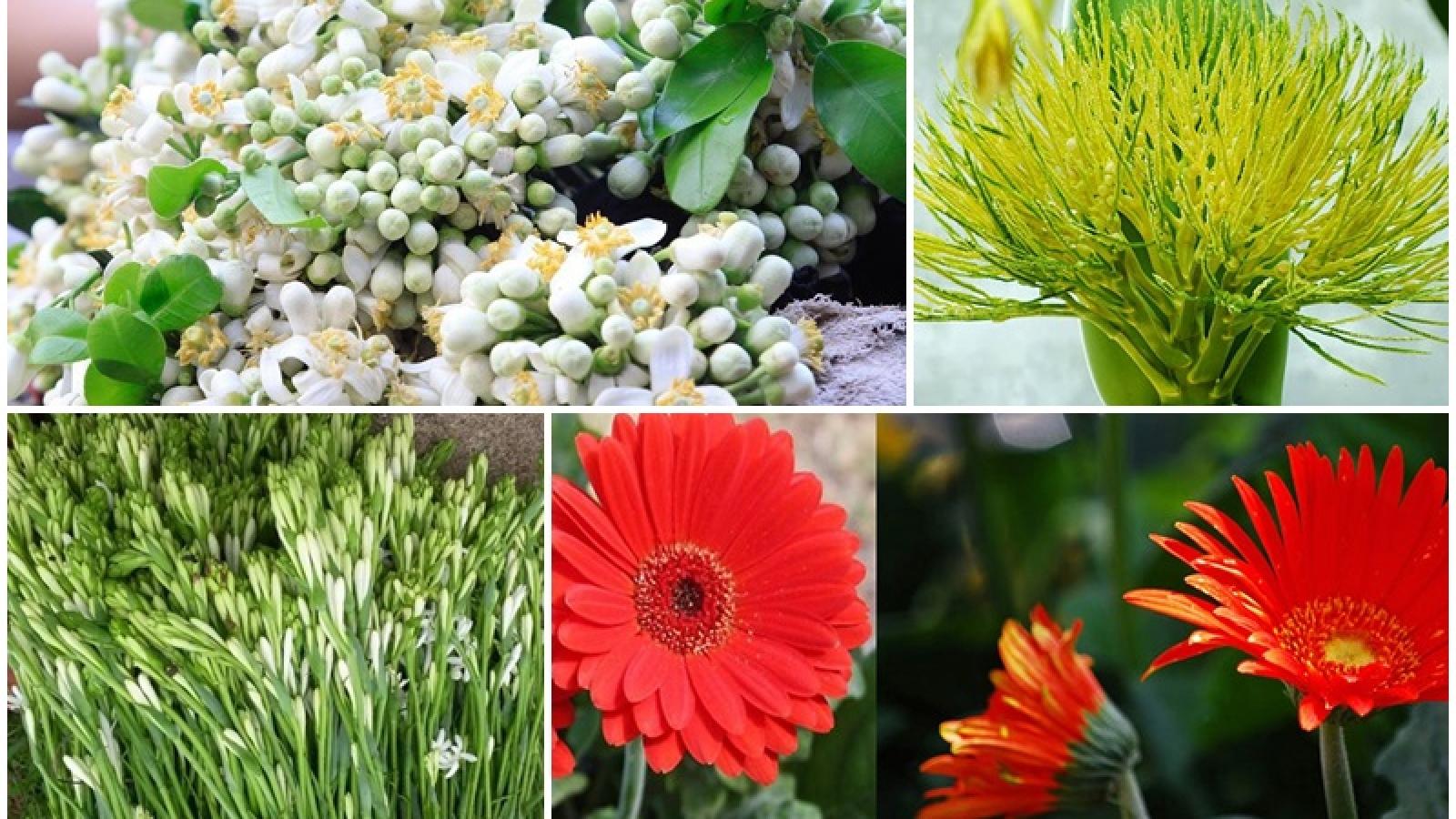 Hoa bưởi, hoa cau...đắt hàng dịp rằm tháng Giêng