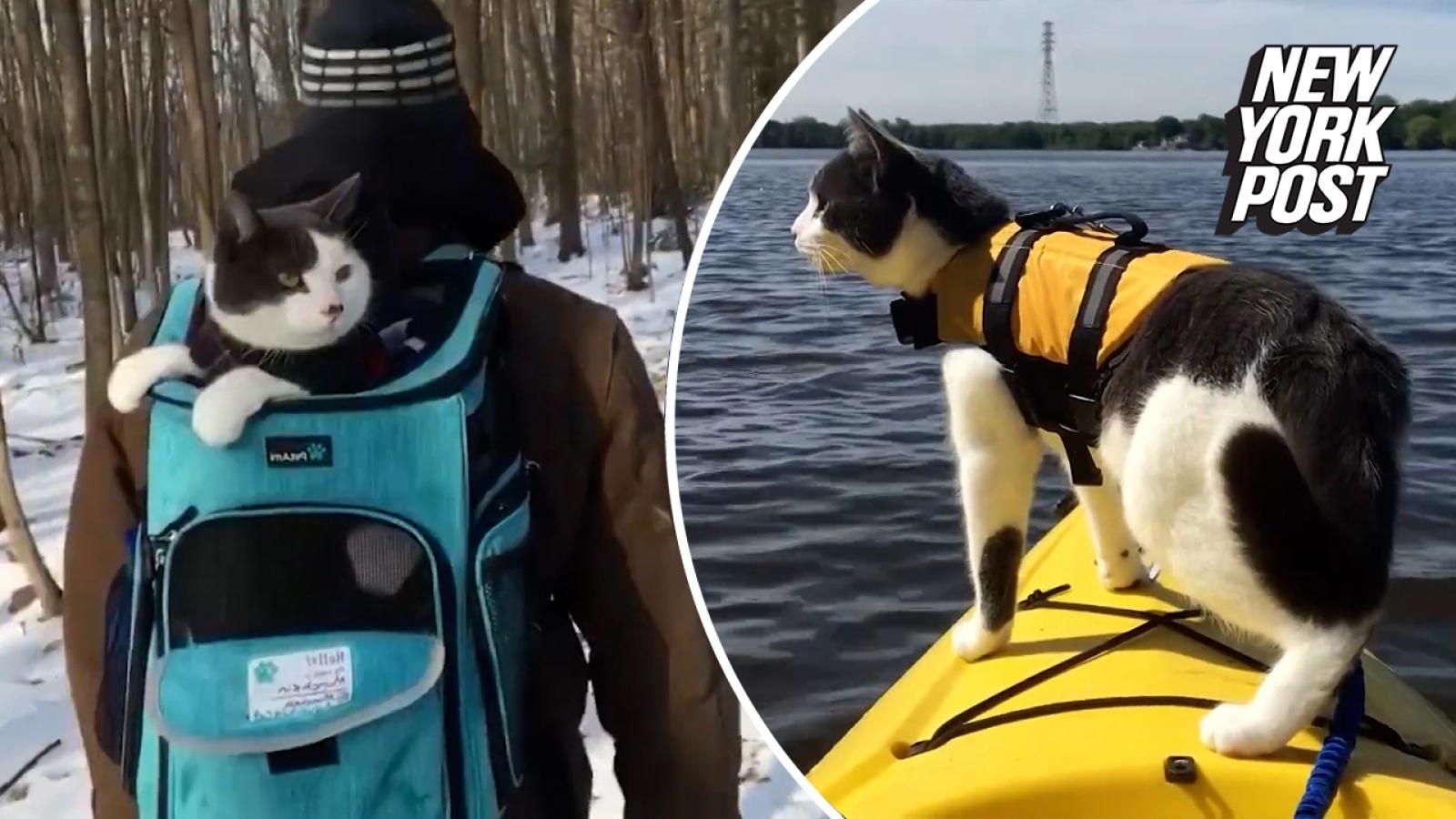 """Chú mèo không ngần ngại phiêu lưu """"lên rừng, xuống biển"""" cùng chủ nhân"""