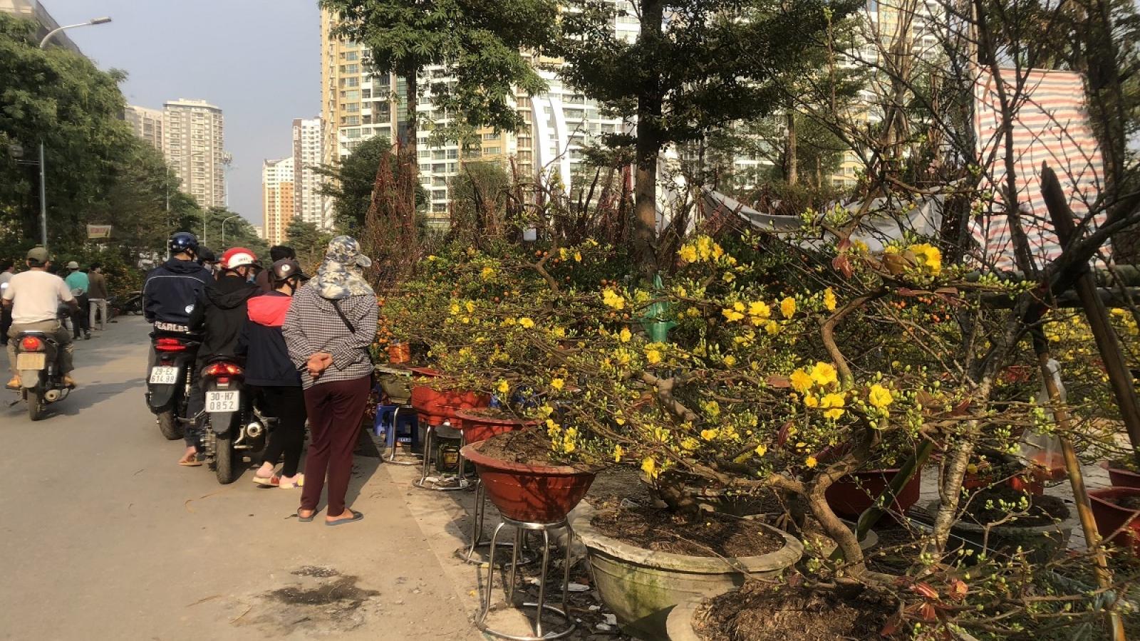 Đào, quất, cây cảnh giảm giá mạnh nhưng vẫn ít người mua