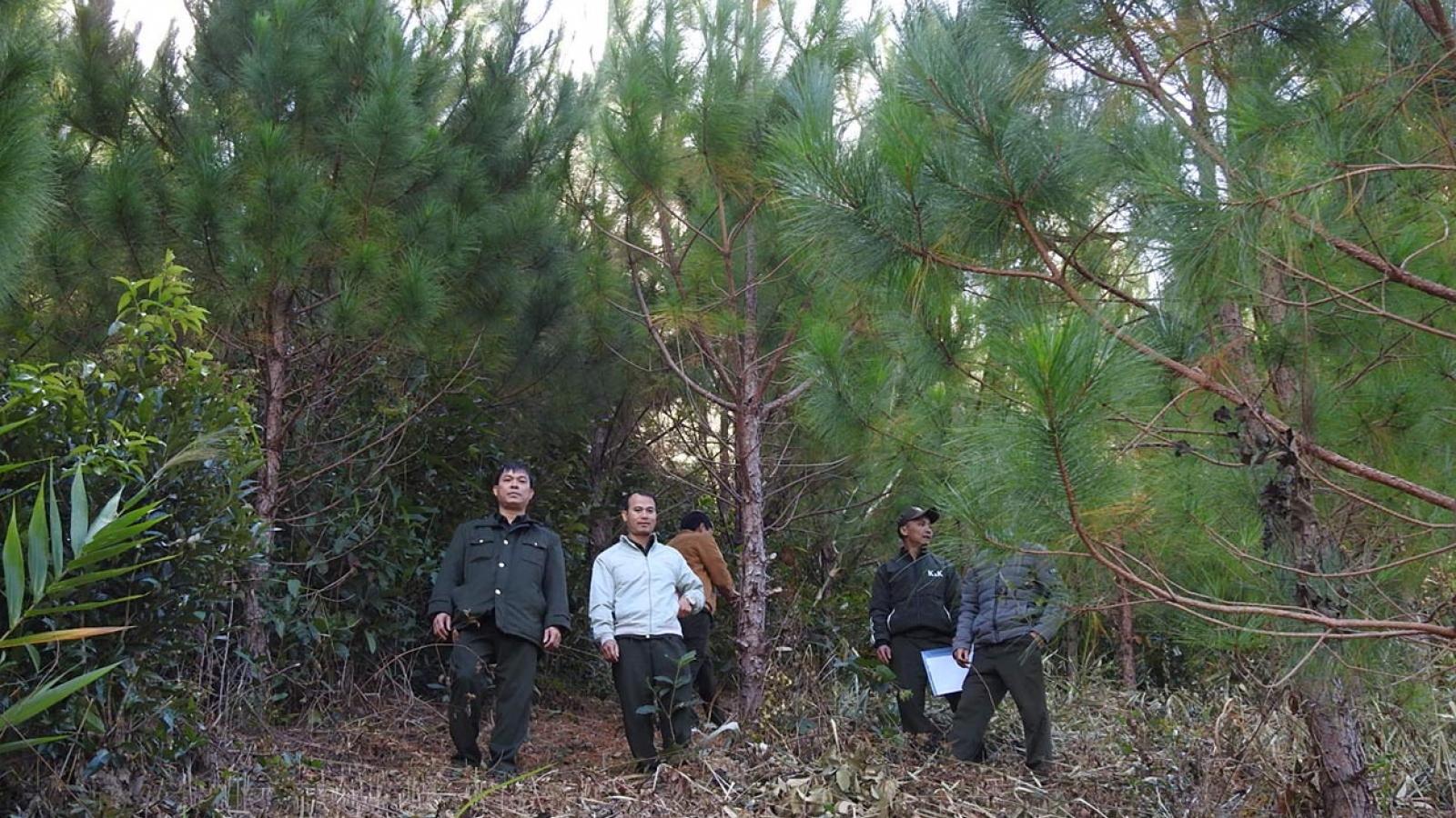 Kon Tum huy động tối đa lực lượng tăng cường phòng cháy rừng