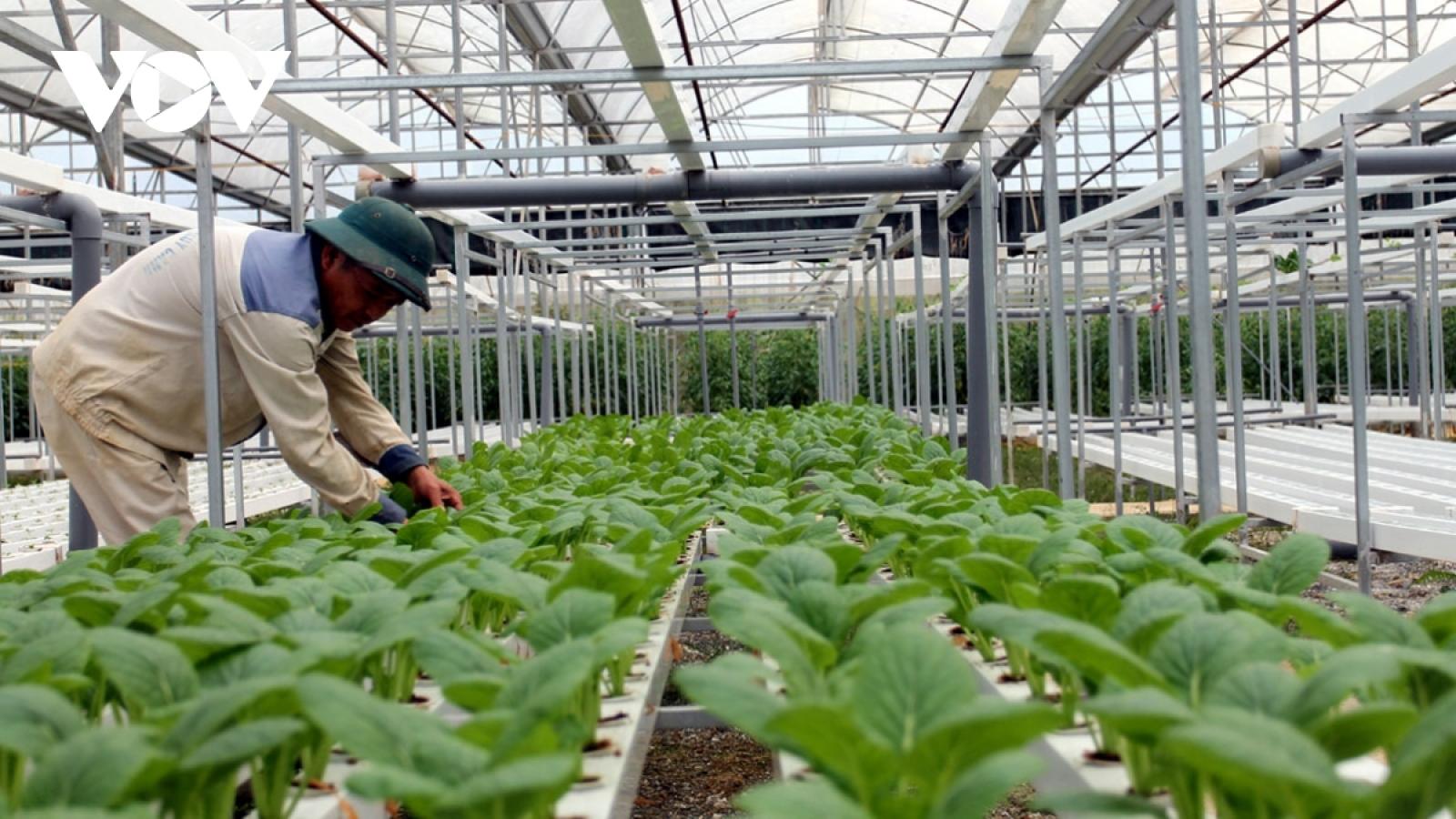 Sản xuất, tiêu thụ nông sản đảm bảo trước dịch Covid-19