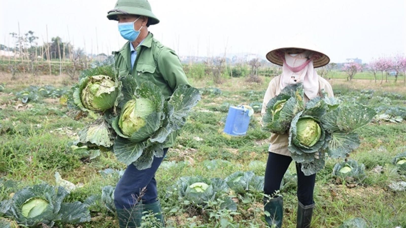 Gần 2.000 tỷ đồng nông sản còn đọng giữa tâm dịch Hải Dương