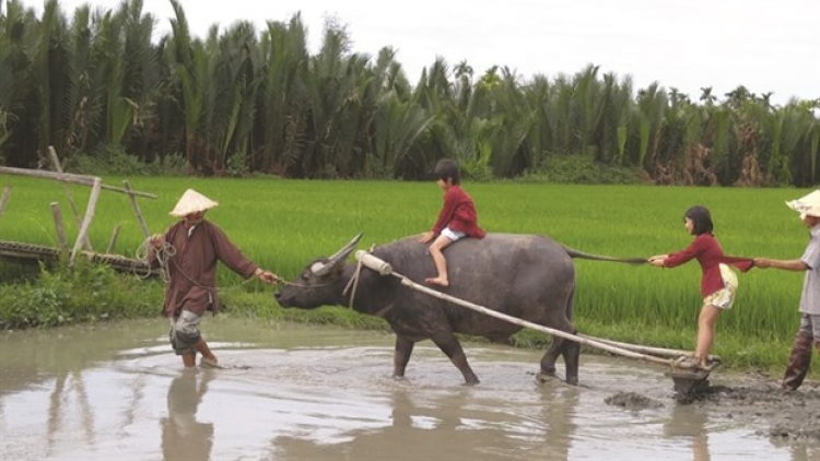 Buffalo tours in Hoi An prove a hit