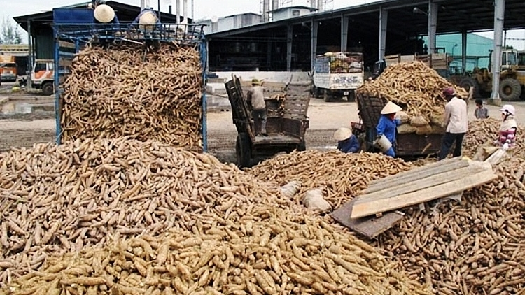 China increases imports of cassava chips and starch from Vietnam