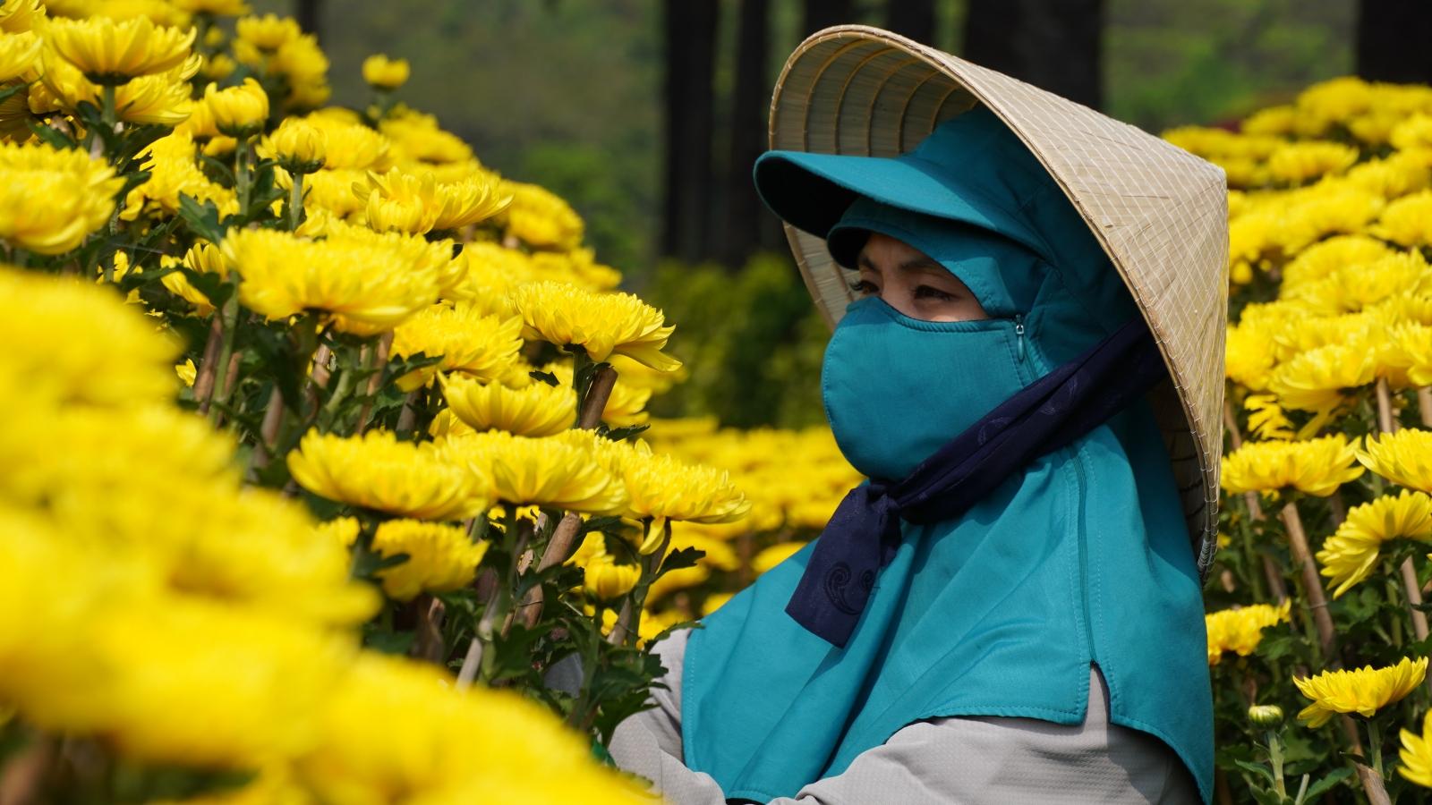 """Người trồng hoa, bán hoa như """"ngồi trên đống lửa"""" vì lo ế hàng dịp Tết"""