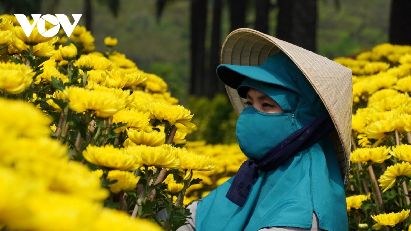 TP HCM vận động người dân mua hoa ủng hộ tiểu thương, người kinh doanh hoa