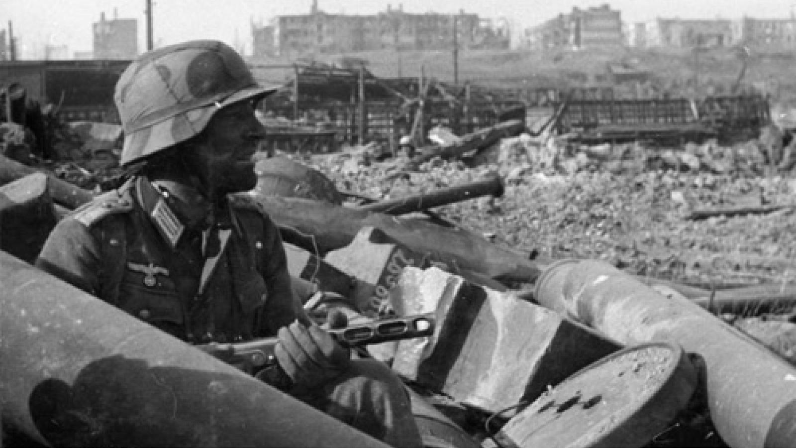 """""""Đội quân"""" chuột và nỗi ám ảnh kinh hoàng của Đức Quốc xã trong Trận Stalingrad"""