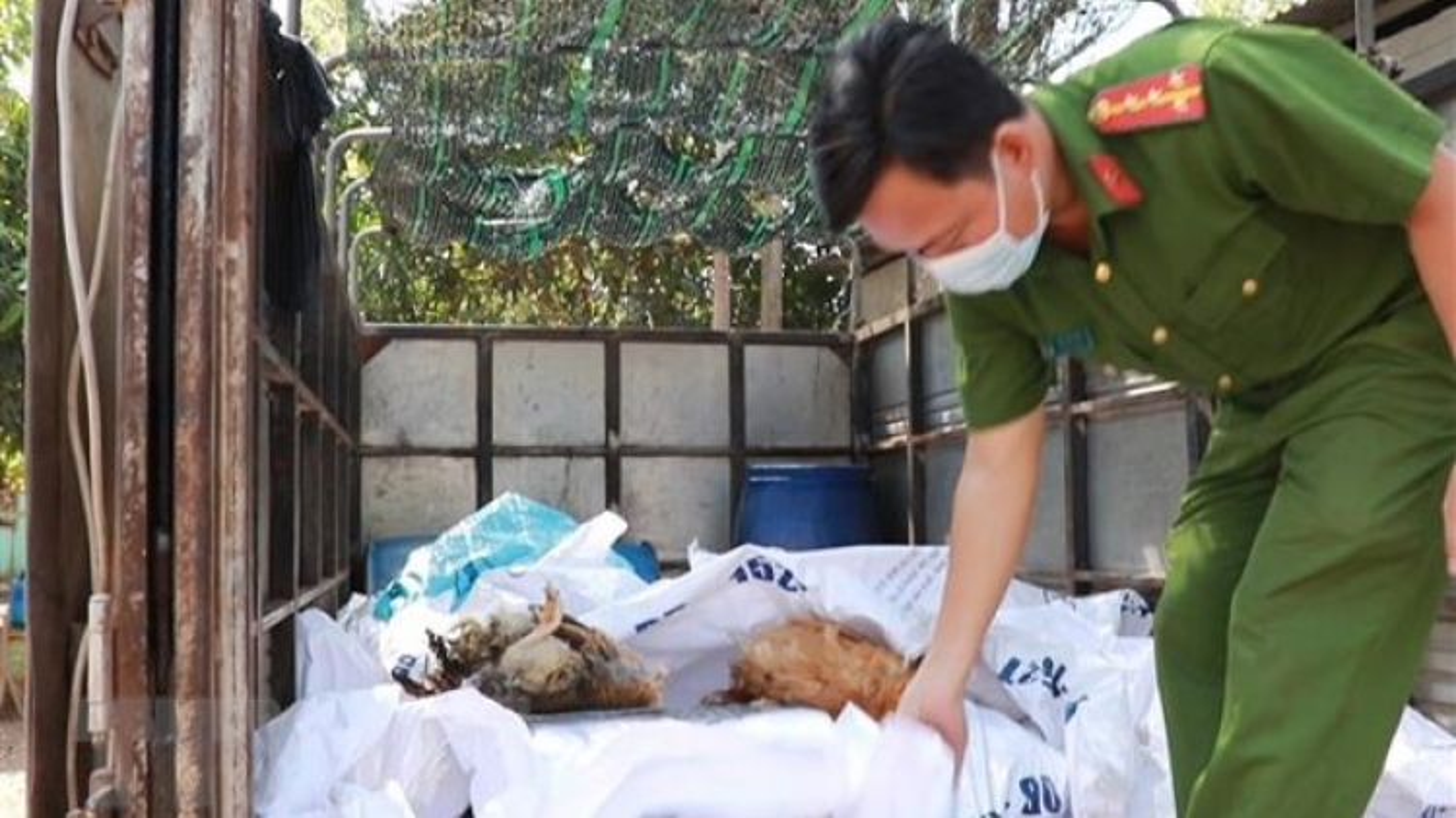 Phát hiện, bắt giữ xe tải vận chuyển gần 400kg gà chết tại Bình Phước