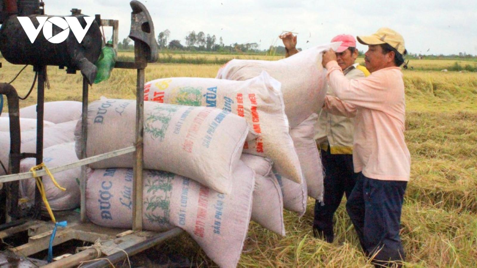 Xuất khẩu gạo sang các thị trường chính sụt giảm trong tháng đầu năm
