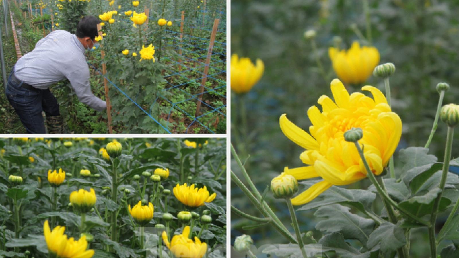 Người dân làng Tây Tựu phấn khởi vì hoa không còn ế ẩm, giá tăng trở lại
