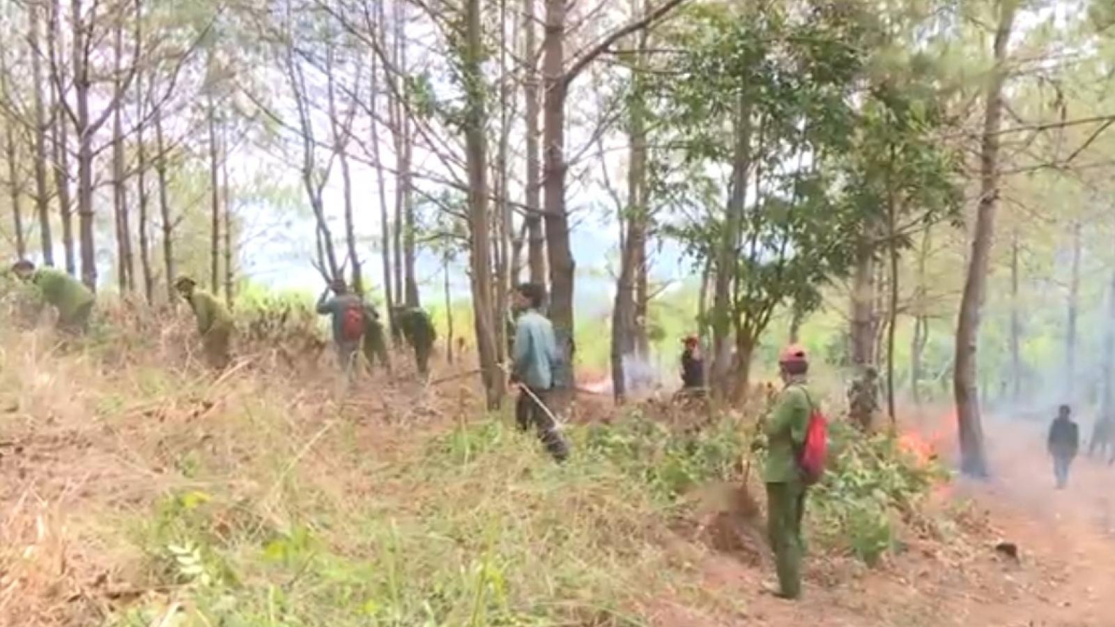 Đốt thực bì có kiểm soát ở Gia Lai để phòng chống cháy rừng
