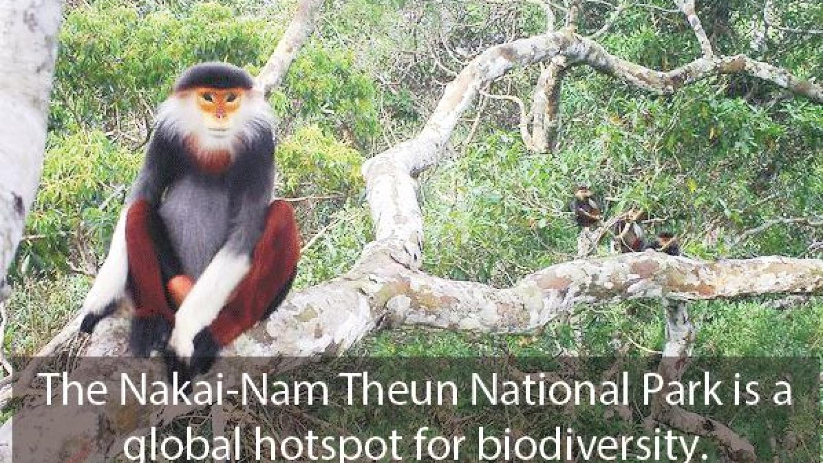 Phát hiện 36 loài động vật hoang dã có nguy cơ tuyệt chủng ở Trung Lào