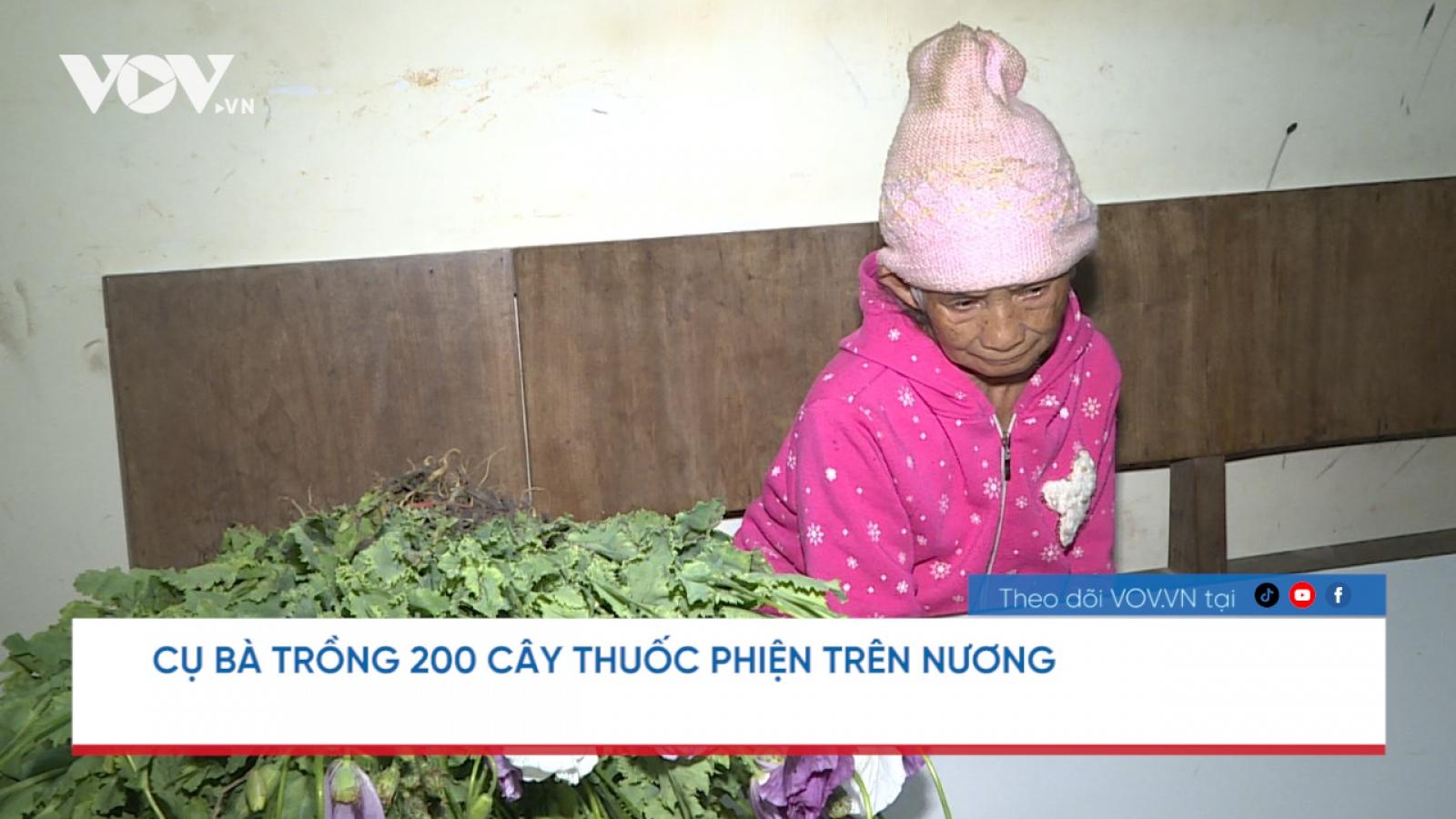 Nóng 24h: Cụ bà trồng 200 cây thuốc phiện trên nương