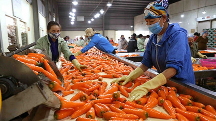 RoK resumes importing Vietnamese carrots