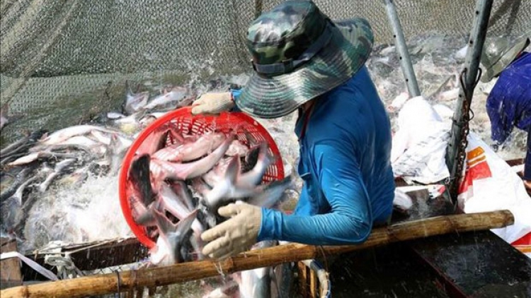 Aquatic exports rise 2.2% in two months