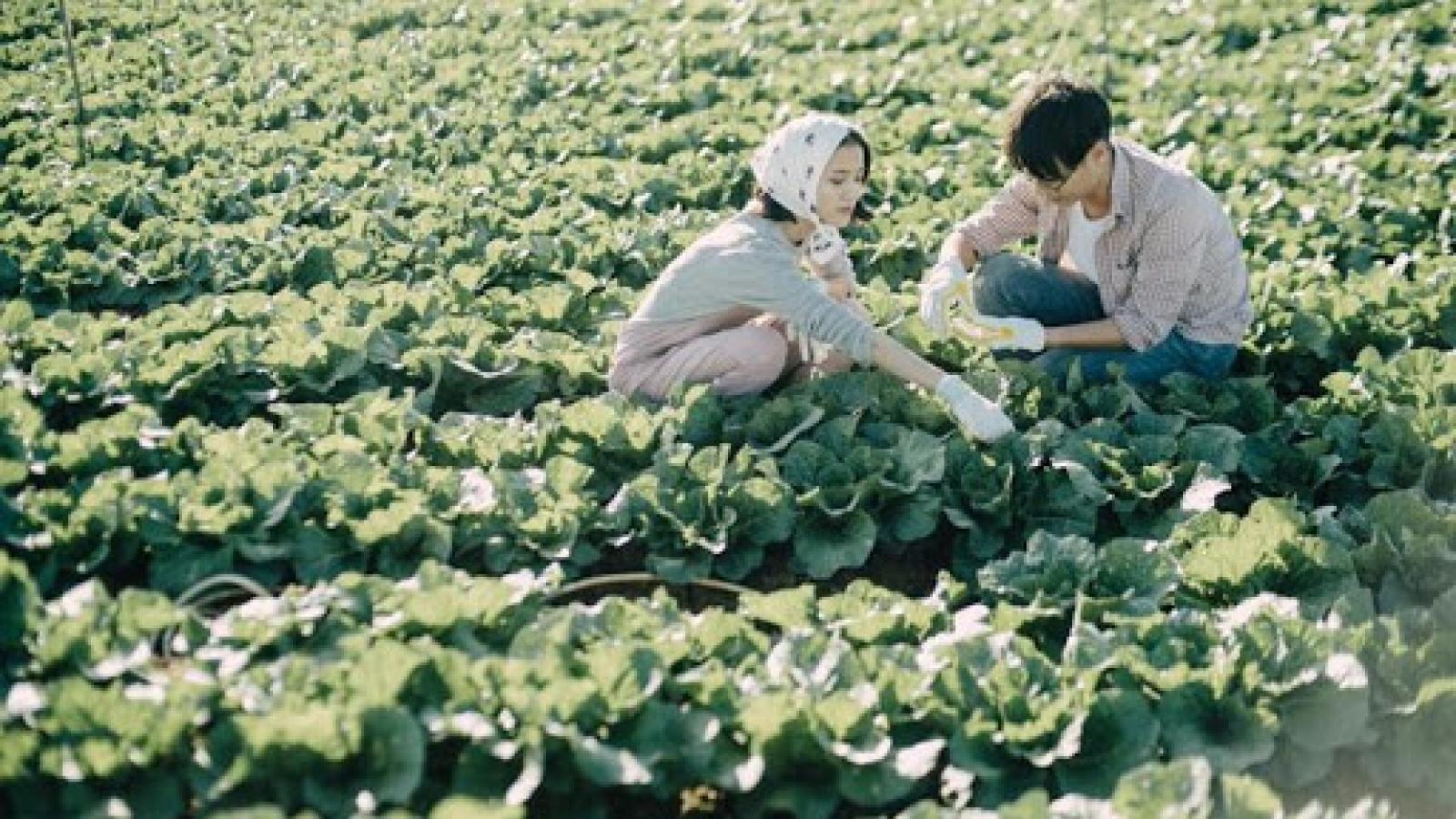 Xu hướng về quê trồng rau, nuôi gà